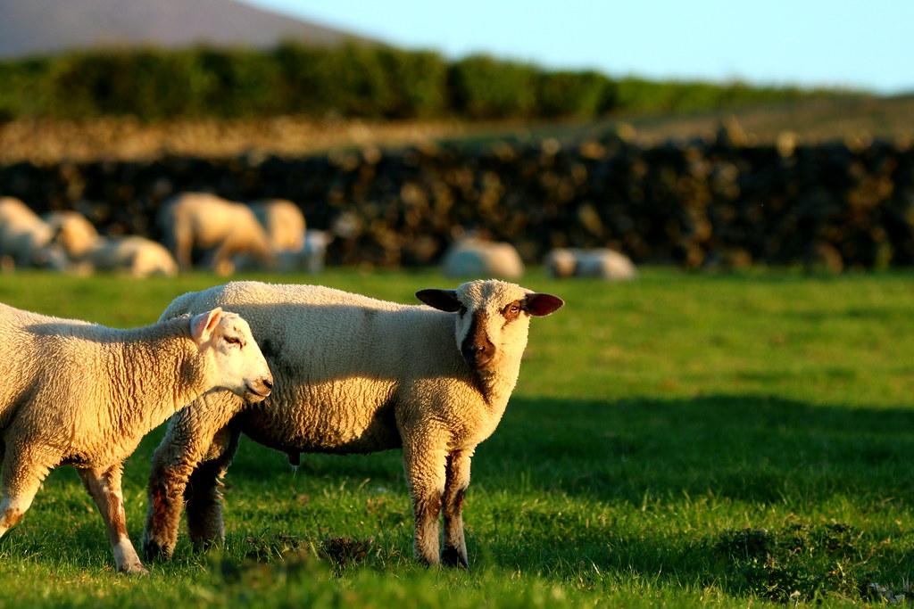 Greenhill Farm: The Bluff