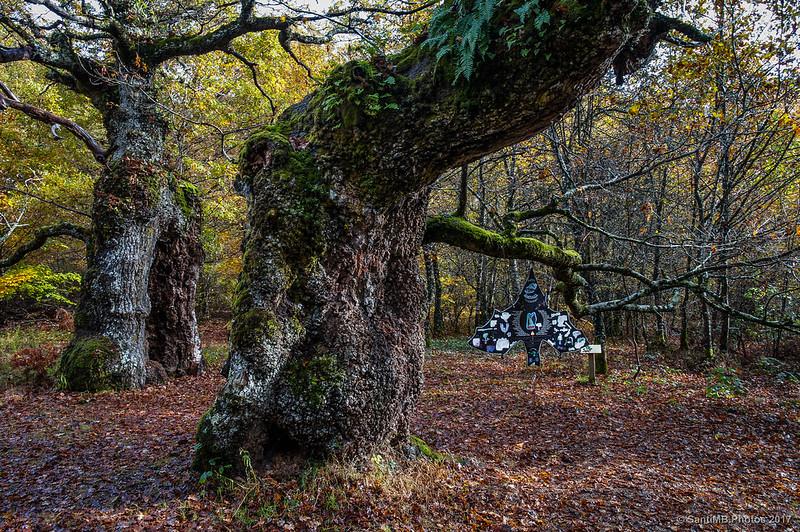 Información sobre la vida de los murciélagos en este bosque