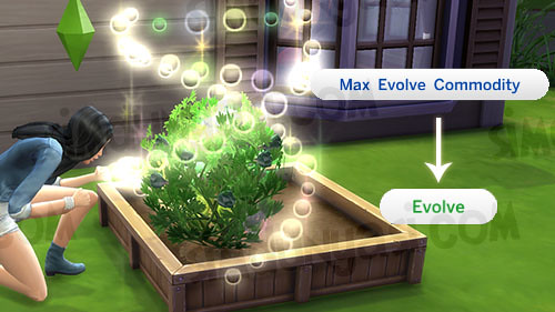 Max Evolve Commodity