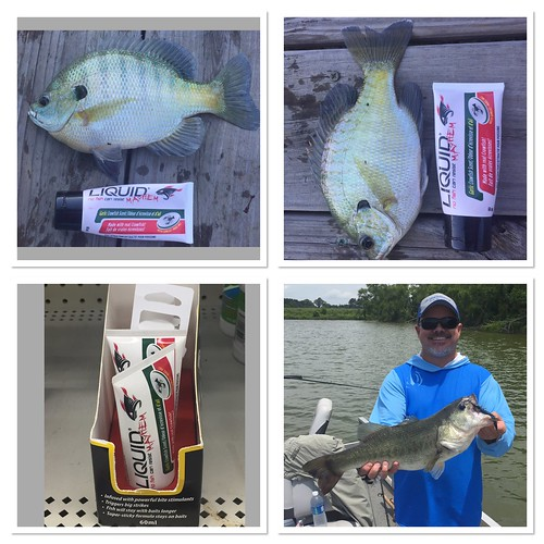 The fish were all over my lures with liquid mayhem on them for Walmart fishing spinners