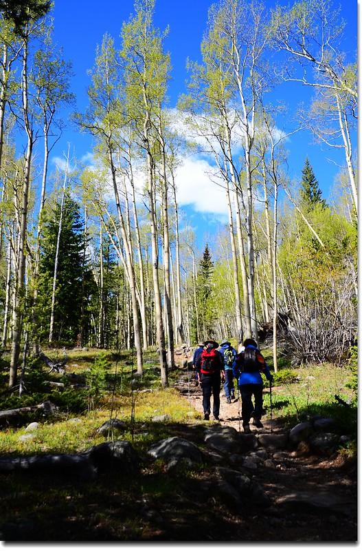 Into the Aspen Grove 2