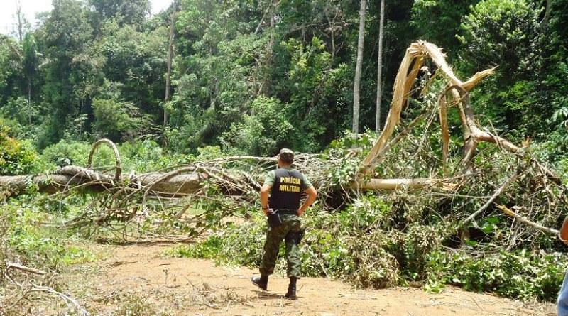 TRF1 condena réu por devastar floresta no PA com uso de veneno proibido