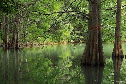 Kyushu University Kasuya Research Forest