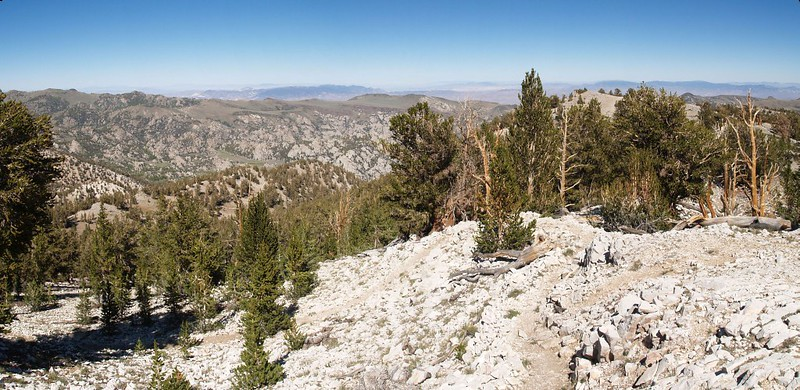 Panorama of the Cottonwood Basin Overlook at the Patriarch Grove