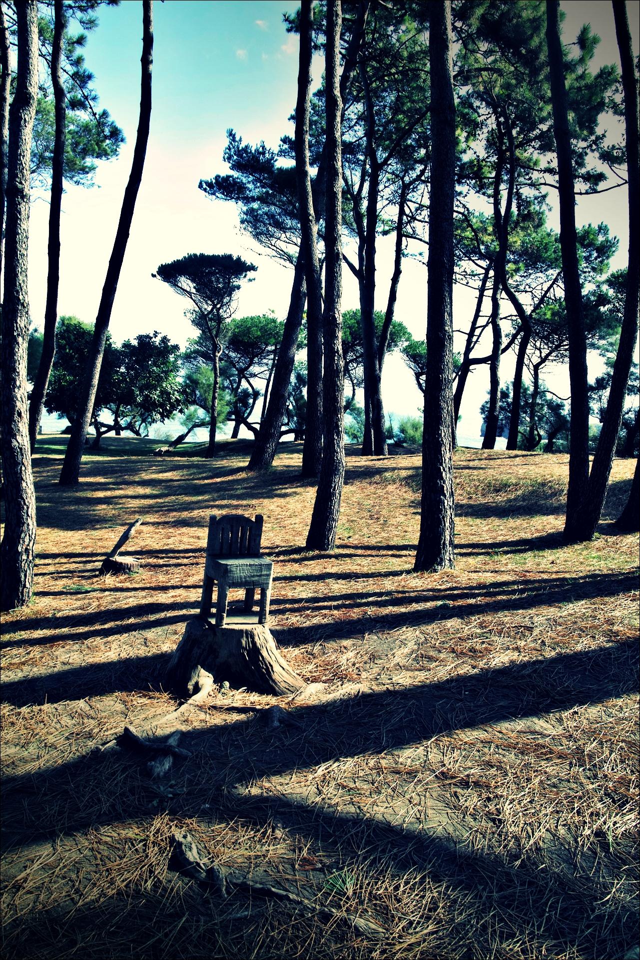나무의자 조각-'산탄데르 둘러보기(Sightseeing Santander)'