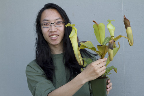 Nepenthes chaniana BE