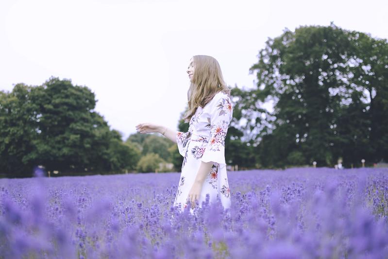 lavender dreams 12
