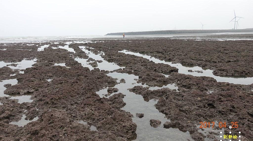 有可能即將被觀塘工業港第一期工程判死刑的大潭藻礁。圖片來源:劉靜榆提供。