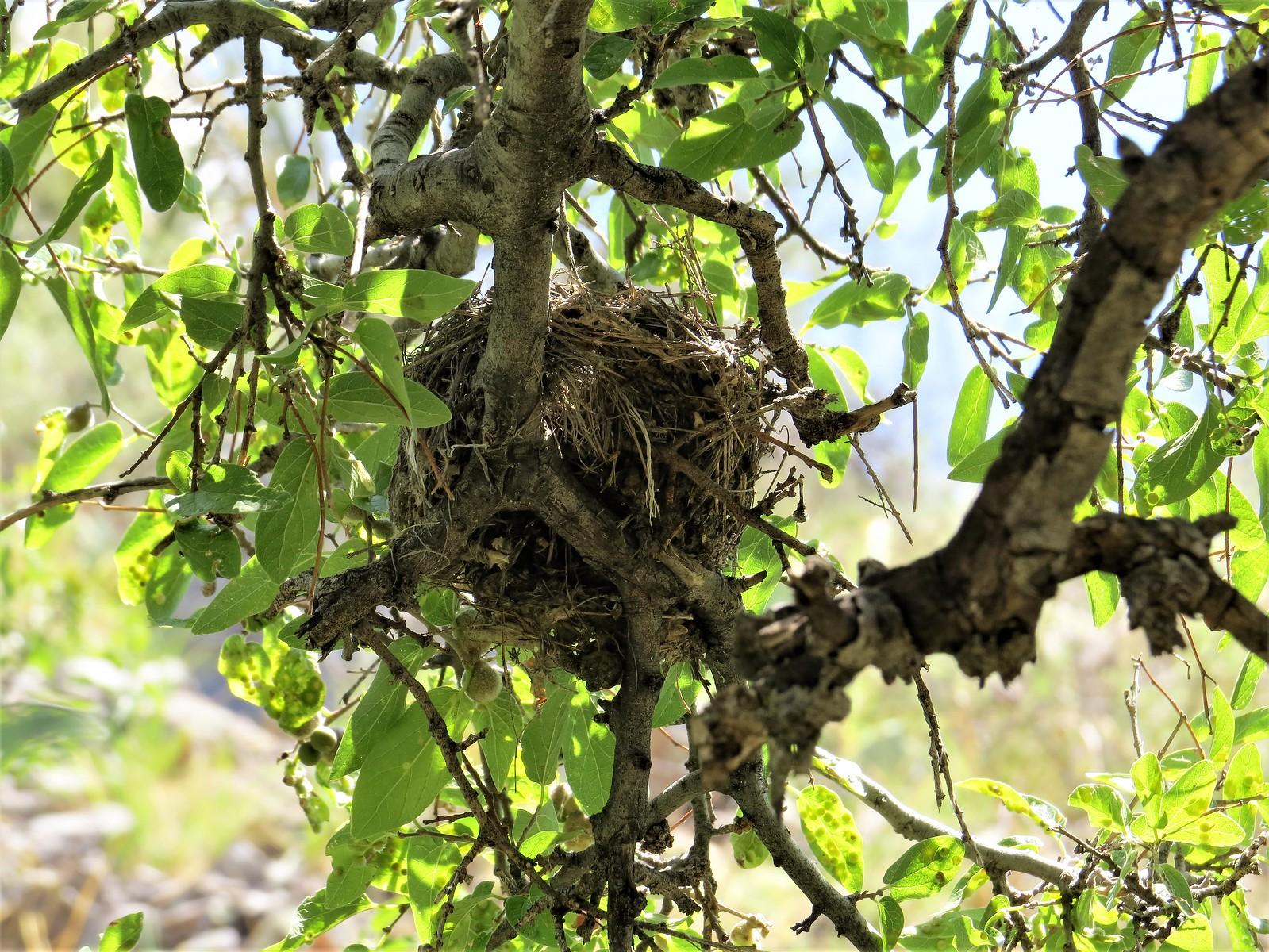 Nest, Organ Mountains, NM