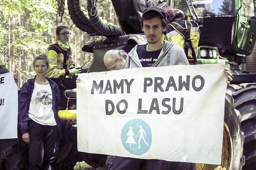 Piąta blokada wycinki Puszczy Białowieskiej