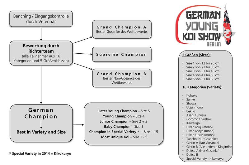 Bewertungsschema German Young Koi Show Kopie