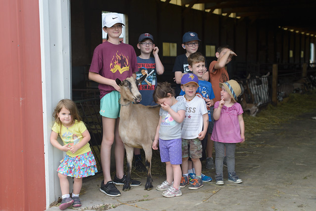 goat farm-72