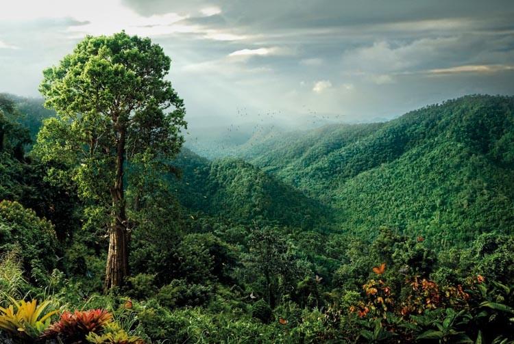 ป่าไม้
