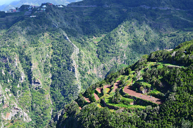 Laurel forest and terraces, Anaga, Tenerife