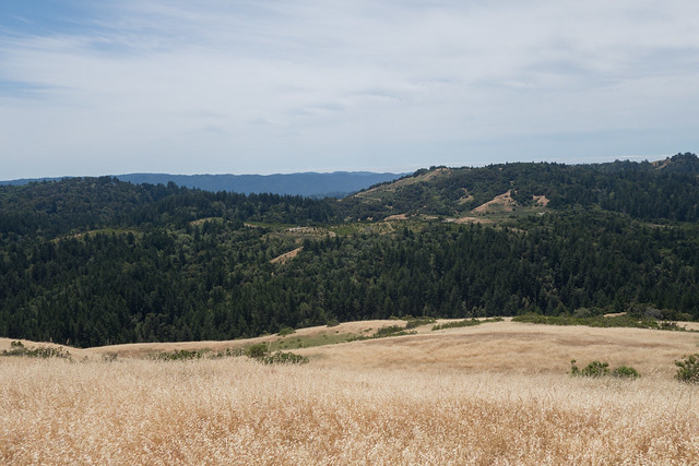 'Skyline Ranch Christmas Tree Farm' Visible Here at the Far End