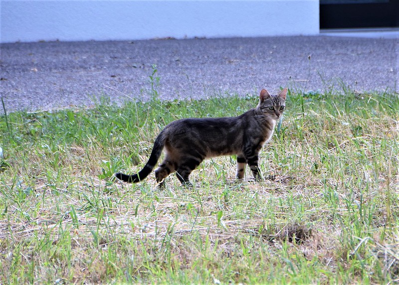 Unknown Cat 24.07.2017