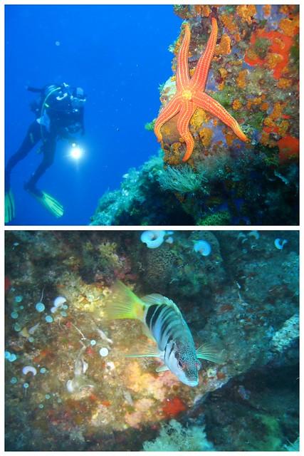 Elba Unterwasser 20172