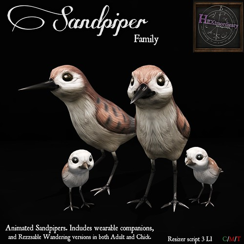 Sandpiper Family! | by HEXtraordinary!