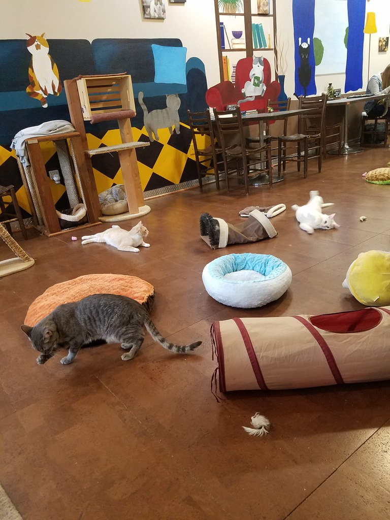 San Diego Cat Cafe