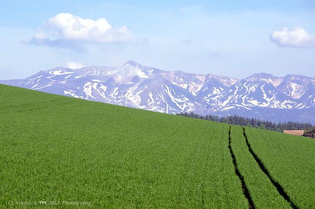 十勝岳と秋まき小麦畑