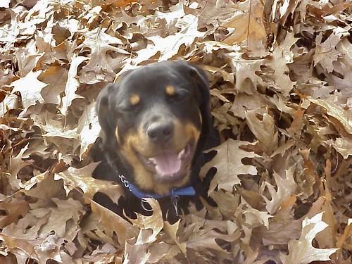 Poochie Dog For Sale