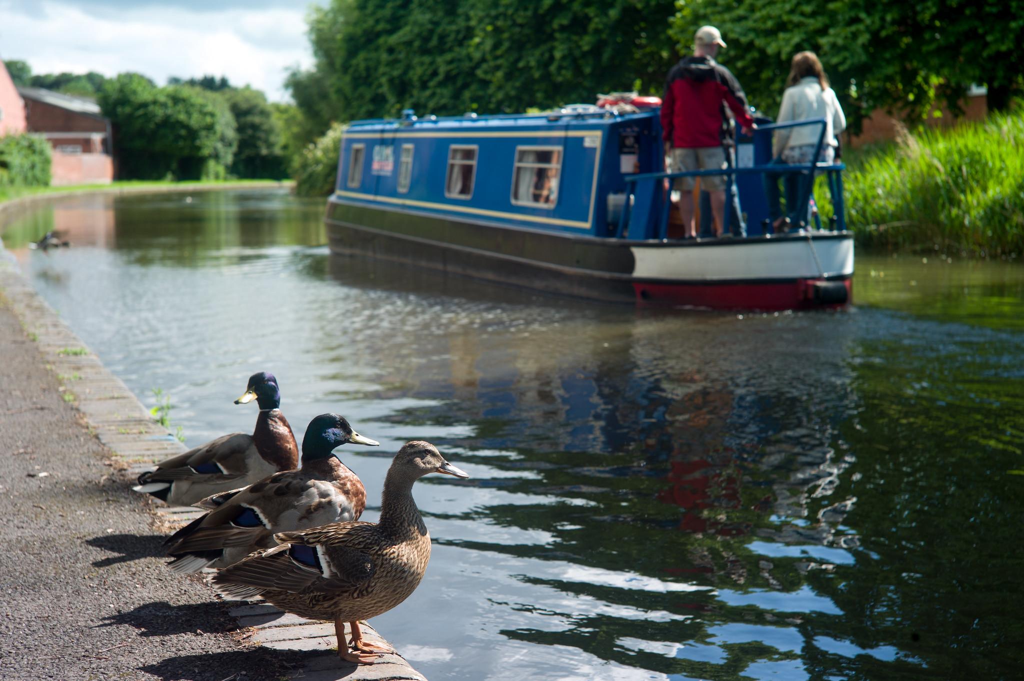 Ducks & Boat