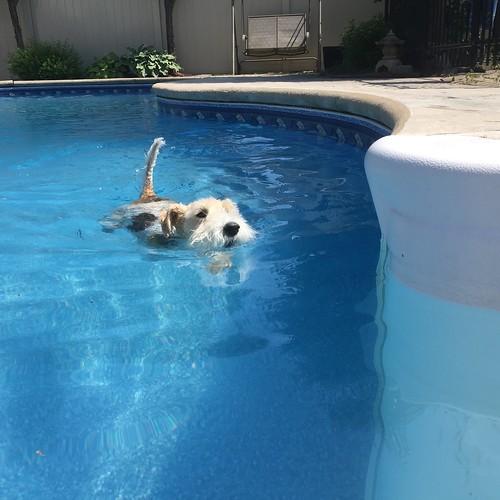 Swimmer dog