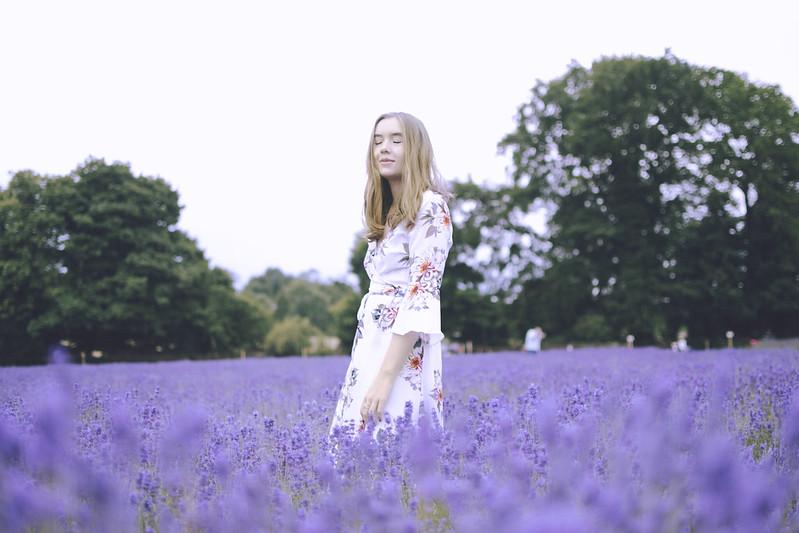lavender dreams 13