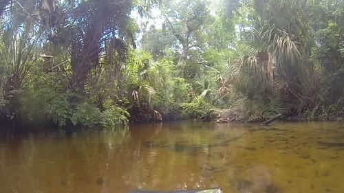 Juniper Springs Creek-006