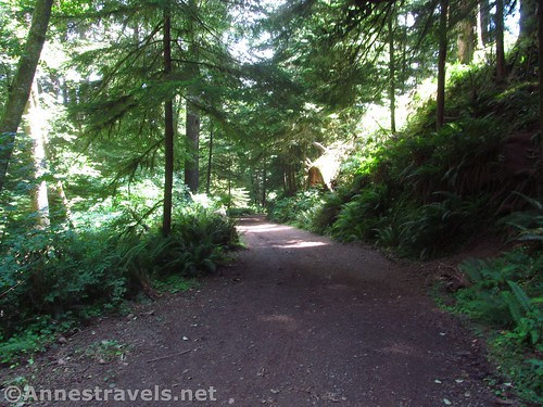 The trail / road back down to the parking area on the Clatsop Loop Trail, Ecola State Park, Oregon