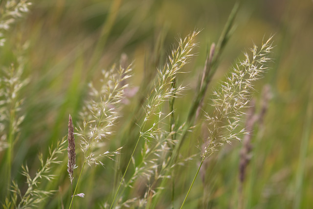 Grasses on the cliffs