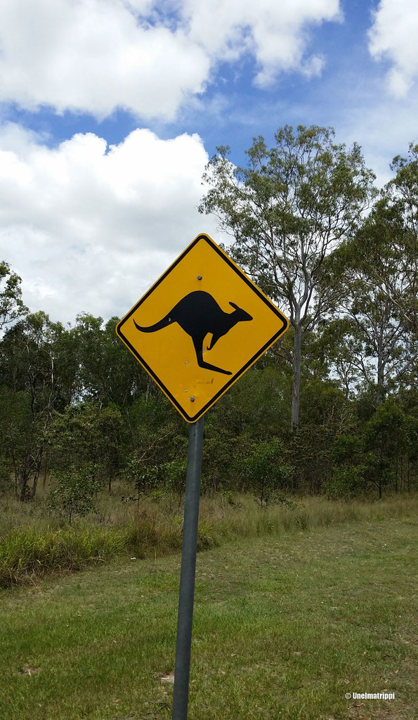 Kengurukyltti, Australia