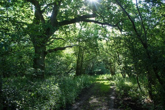 Turnworth Common I