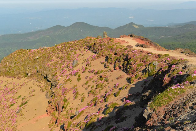 高千穂峰 火口の岩壁に咲くミヤマキリシマ