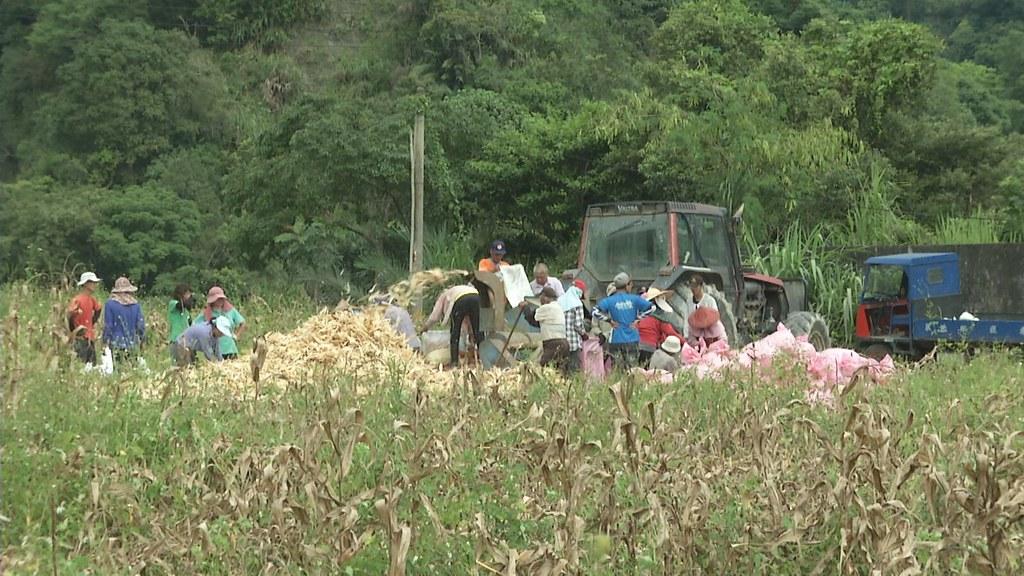 911-1-50 奇美部落的居民和慈心基金會,也嘗試把本土玉米,加工成產品。