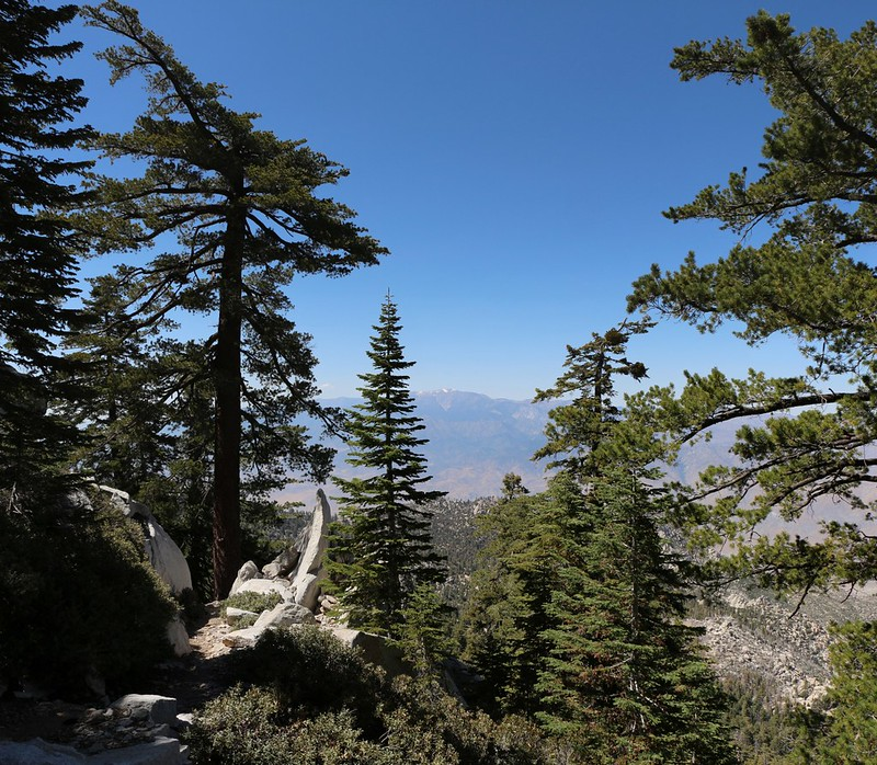 View north to San Gorgonio Mountain as we hike north on the Fuller Ridge Trail