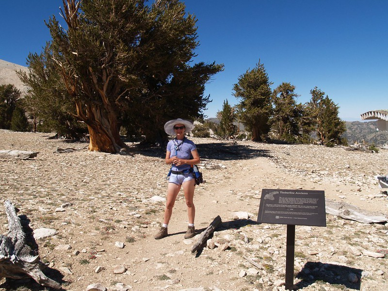 Vicki and I start our tour of the Patriarch Grove of Ancient Bristlecone Pines