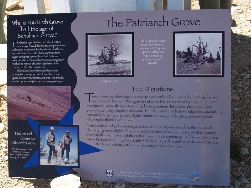 Sign at the Patriarch Grove showing that there are many new trees recently thanks to recent warming trends