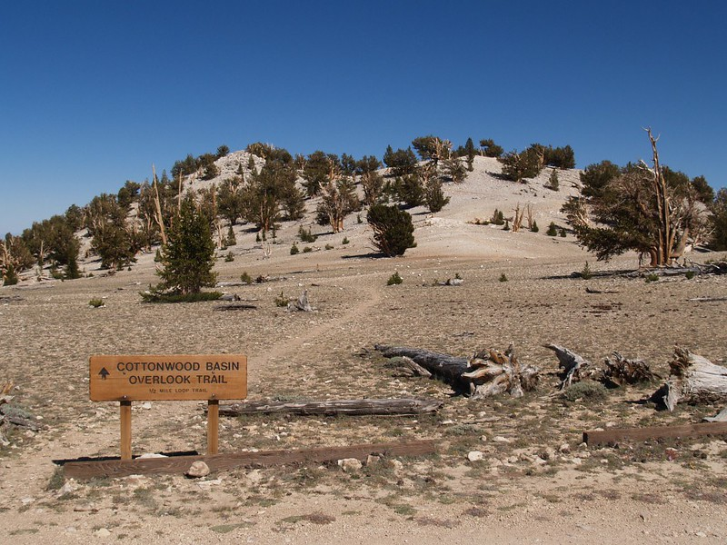 We decided to hike the Cottonwood Basin Overlook Trail at the Patriarch Grove