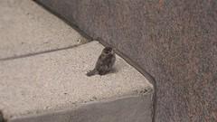 stairway2heaven [scorpionBird (Scorpium)]