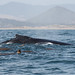 10July2017 Whale Watch Dos Osos-2