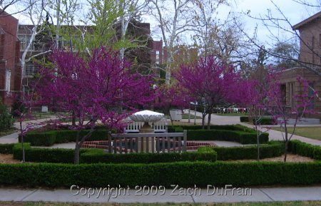 redbud_fountain