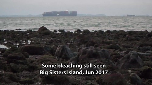 Some bleaching still seen at Big Sisters Island, Jun 2017