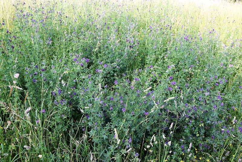 Meadow 11.06 (2)