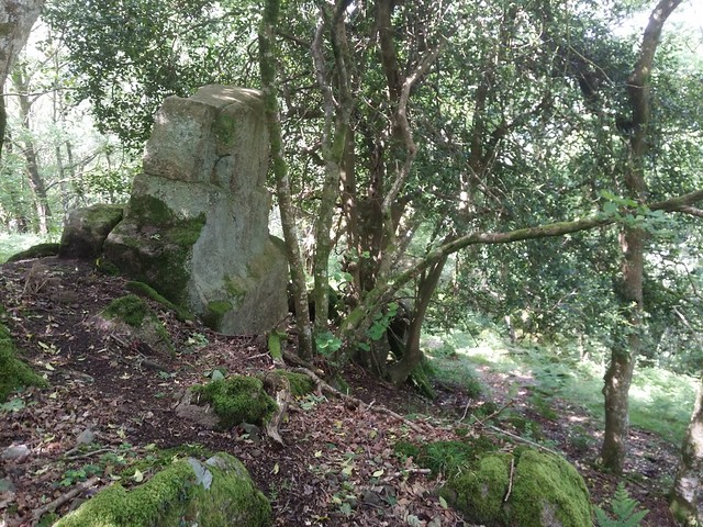 Upper outcrop of Trendlebere Tor in the Woods.