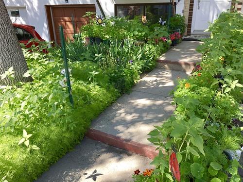 Jardin floral au début de l'été
