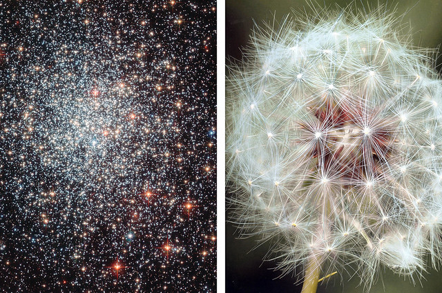 Galactic Dandelion