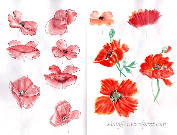 Sketching poppies 3