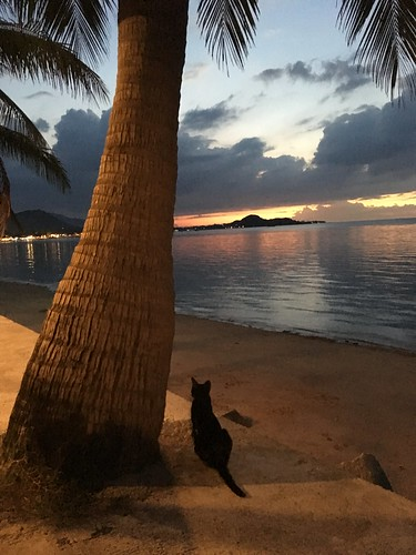 今日のサムイ島 6月14日 のんびりシービューディナー