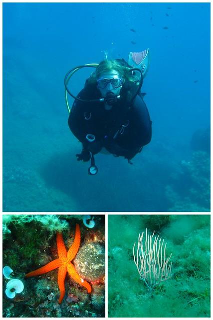 Elba Unterwasser 2017